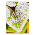 hearts in nature greeting cards