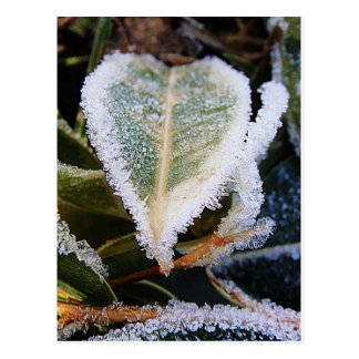 Heartshaped leaf with ice postcard
