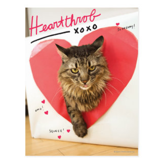 Heartthrob Cat Postcard