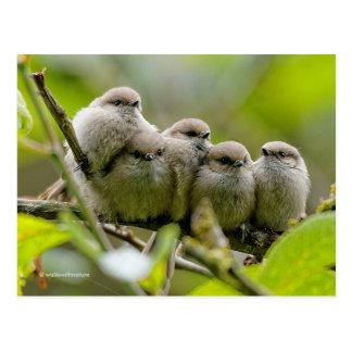 Heartwarming Quintet of Bushtits in the Plum Tree Postcard