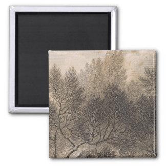 Heath forest, Madeira Fridge Magnet