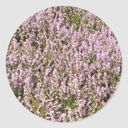 Heather Flowers Beautiful View Classic Round Sticker