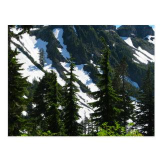 Heather Meadows Trees Postcard