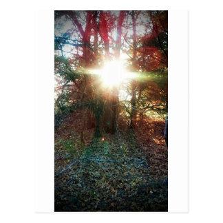 Heaven Let Your Light Shine Down Postcard