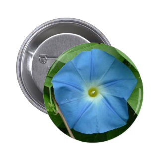 Heavenly Blue Morning Glory Pins