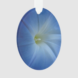 Heavenly Blue Morning Glory Close-Up