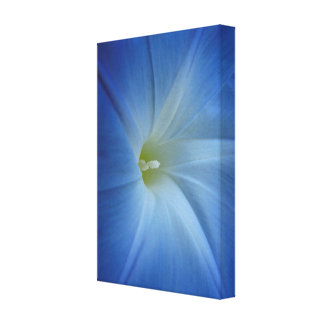 Heavenly Blue Morning Glory Close-Up Canvas Print