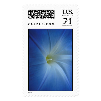 Heavenly Blue Morning Glory Close-Up Postage Stamp