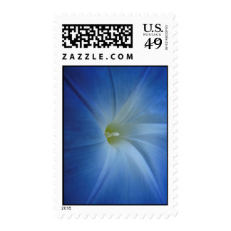 Heavenly Blue Morning Glory Close-Up Stamp