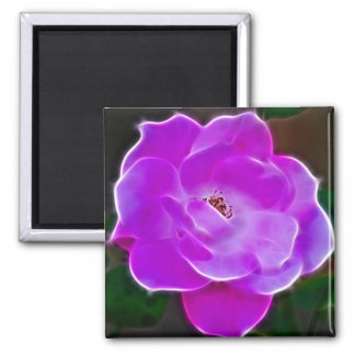 Heavenly pink rose and meaning magnet