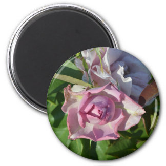 Heavenly Rose Abstract 2 Inch Round Magnet
