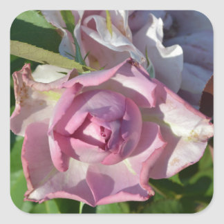 Heavenly Rose Abstract Square Sticker