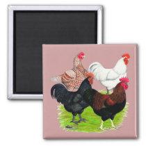 Heavy Breed Rooster Quartet Magnet