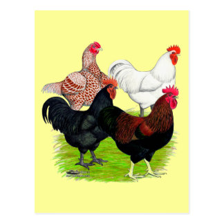 Heavy Breed Rooster Quartet Postcard