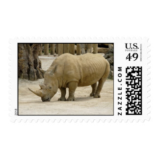 Heavy Brown Rhinoceros In The Zoo Of Auckland Stamps
