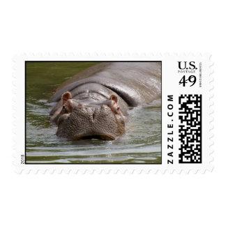 Heavy Hippopotamus Swimming In The Zoo Of Auckland Stamp