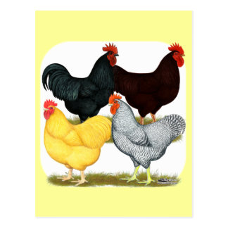 Heavy Rooster Chicken Quartet Postcard
