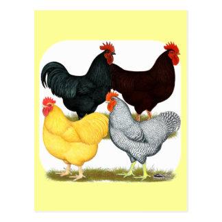 Heavy Rooster Chicken Quartet Postcard