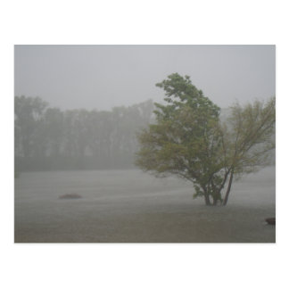 Heavy Windy Storm over a already Flooded Lake Postcard