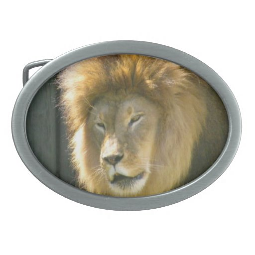 Hebilla de REY OF THE JUNGLE LION Hebillas De Cinturon Ovales