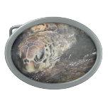 Hebilla del cinturón adulta de la tortuga de mar hebilla cinturon