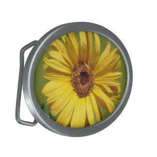 Hebilla del cinturón amarilla de la margarita de l hebilla cinturón oval