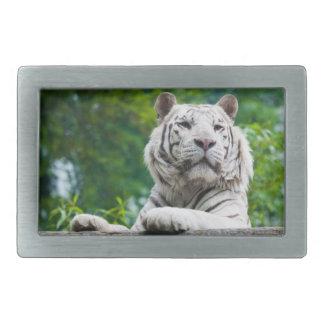 Hebilla del cinturón blanca del tigre hebillas cinturón rectangulares