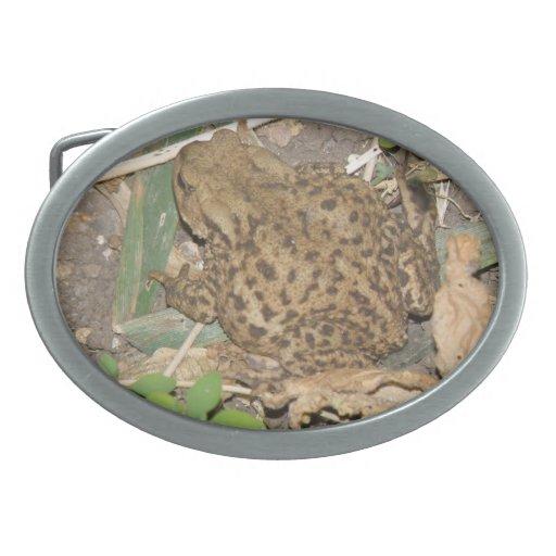 Hebilla del cinturón común del sapo del europeo hebillas de cinturón ovales