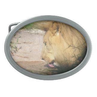 Hebilla del cinturón de consumición del león hebilla cinturón oval