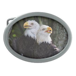 Hebilla del cinturón de Eagle calvo Hebillas Cinturón Ovales