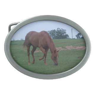 Hebilla del cinturón de Hores de la granja Hebilla Cinturon Oval