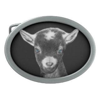 Hebilla del cinturón de la cabra de Pygora Hebillas De Cinturon Ovales