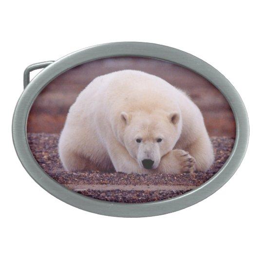 Hebilla del cinturón de la naturaleza del oso hebillas de cinturón ovales