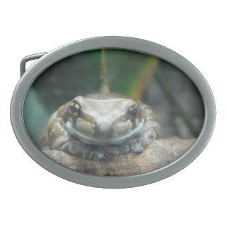 Hebilla del cinturón de la rana de la leche del Am Hebillas Cinturon Ovales