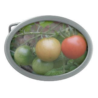 Hebilla del cinturón de los tomates del semáforo hebilla de cinturon oval