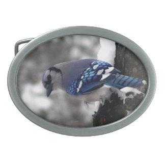 Hebilla del cinturón del arrendajo azul hebilla cinturón oval