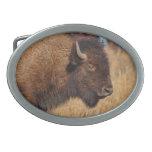 Hebilla del cinturón del búfalo hebillas de cinturon ovales