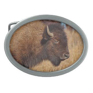 Hebilla del cinturón del búfalo hebillas de cinturón ovales