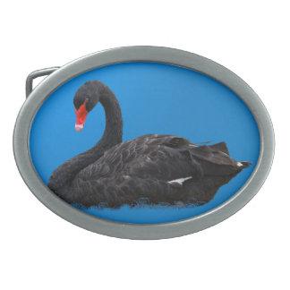 Hebilla del cinturón del cisne negro hebillas cinturón ovales
