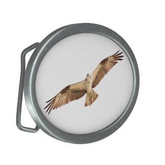 Hebilla del cinturón del halcón del vuelo hebillas de cinturon ovales