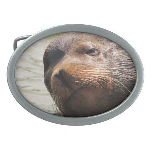 Hebilla del cinturón del león marino de Steller Hebillas De Cinturon