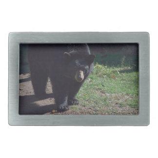 Hebilla del cinturón del oso negro hebilla de cinturón rectangular