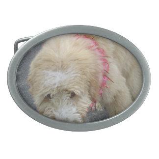 Hebilla del cinturón inglesa vieja del perro pasto hebillas de cinturon ovales