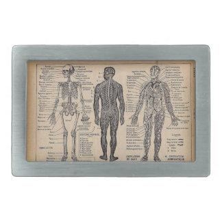 Hebilla del cinturón médica del diagrama de la ana hebilla cinturón rectangular