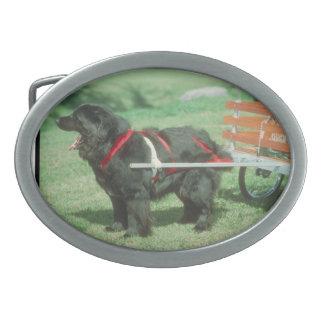 Hebilla del cinturón negra del perro de Terranova Hebillas Cinturon Ovales