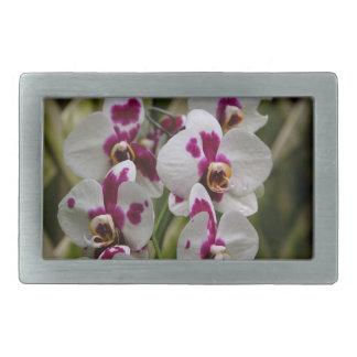 Hebilla del cinturón - orquídea hebilla de cinturon rectangular