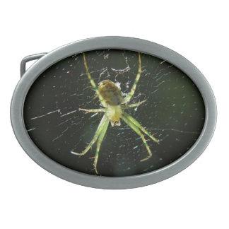 Hebilla del cinturón verde de la araña que brilla hebillas cinturon ovales