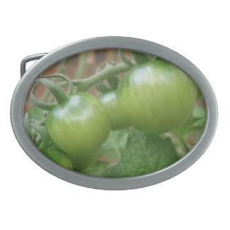 Hebilla del cinturón verde de los tomates hebilla de cinturon oval