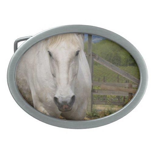 Hebilla equina blanca hebillas de cinturón ovales