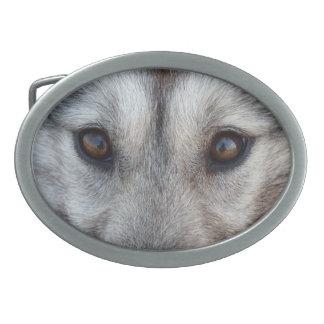 Hebillas del perro del lobo del trineo de la hebil hebilla cinturon oval